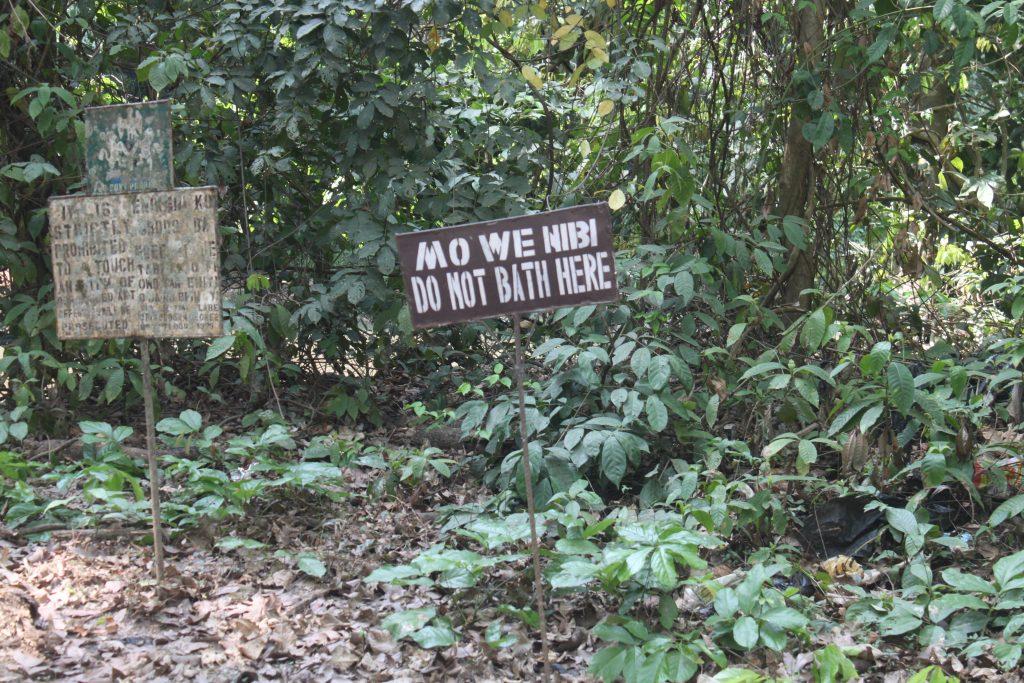 Osun Osogbo Forest